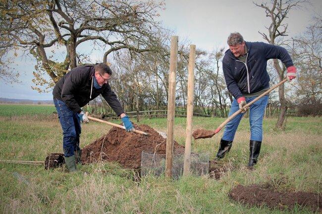 Team pflanzt einen Baum